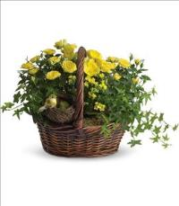 Yellow Trio Basket by The Foliage Shoppe