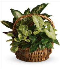 Emerald Garden Basket by The Foliage Shoppe