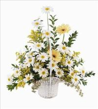 Daisies & Yellow Gerberas by The Foliage Shoppe