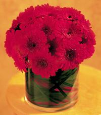 Red Gerbera Mound by The Foliage Shoppe